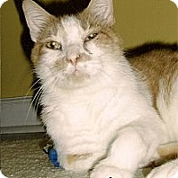 Adopt A Pet :: Murph - Medway, MA