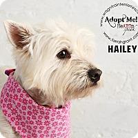 Adopt A Pet :: Hailey-pending adoption - Omaha, NE