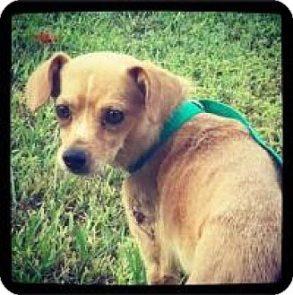 Terrier (Unknown Type, Small) Mix Dog for adoption in Grand Bay, Alabama - Jenkins