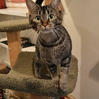 Adopt A Pet :: Sweet Mama - Ashland, OH
