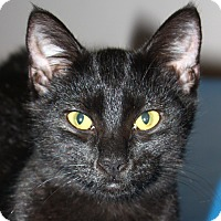 Adopt A Pet :: Batman - adoption pending - North Branford, CT