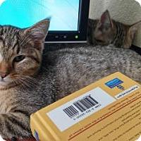 Adopt A Pet :: Mandi - Bulverde, TX
