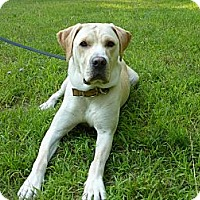 Adopt A Pet :: Chester - Stroudsburg, PA