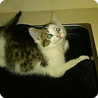 Adopt A Pet :: Skye - Sterling Hgts, MI