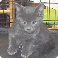 Adopt A Pet :: Bode - Catasauqua, PA