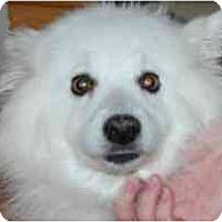 Adopt A Pet :: Coquette - Rigaud, QC