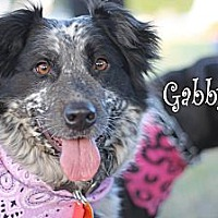 Blue Heeler/Border Collie Mix Dog for adoption in Wichita Falls, Texas - Gabby