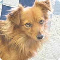 Adopt A Pet :: Rover - Tumwater, WA