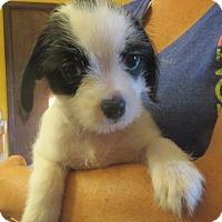 Adopt A Pet :: Bernard - Greenville, RI