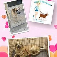 Adopt A Pet :: Louie - Pflugerville, TX