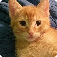 Adopt A Pet :: Axl - Irvine, CA