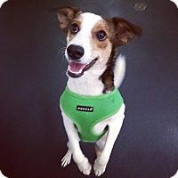 Adopt A Pet :: Sidse Babett Knudsen - Jersey City, NJ