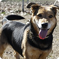 Adopt A Pet :: Halley - Mayflower, AR