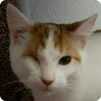 Adopt A Pet :: Jolene - Lexington, KY