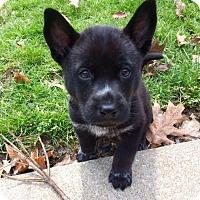Adopt A Pet :: Mr. Fitz - Adoption Pending - Northeast, OH
