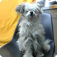 Terrier (Unknown Type, Small) Mix Dog for adoption in San Bernardino, California - URGENT on 4/23 @DEVORE