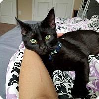 Adopt A Pet :: Skye - Garner, NC