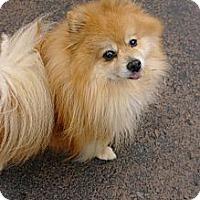 Adopt A Pet :: Marcel - Vaudreuil-Dorion, QC