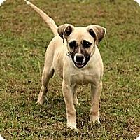 Adopt A Pet :: Bianca - Staunton, VA