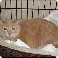 Adopt A Pet :: Sally - Milwaukee, WI