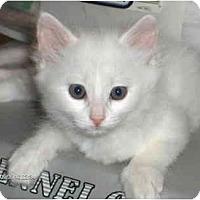 Adopt A Pet :: Buddha - Davis, CA