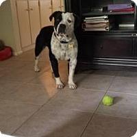 Adopt A Pet :: Johnny - Scottsdale, AZ