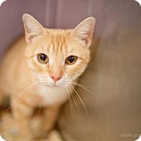 Adopt A Pet :: Apricot - Valley Falls, KS
