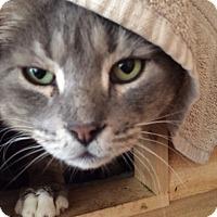 Adopt A Pet :: Tommy Boy - Monroe, GA