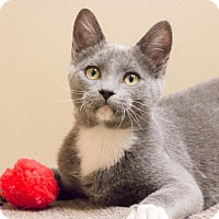 Adopt A Pet :: Hamilton - Chicago, IL