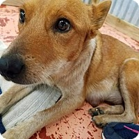 Adopt A Pet :: Jenny HW+ - Fort Worth, TX