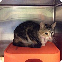 Adopt A Pet :: Shirley Temple - Janesville, WI