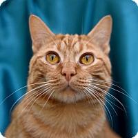 Adopt A Pet :: Rico Suave - Chattanooga, TN