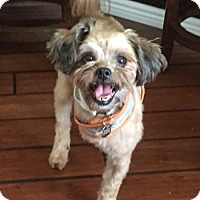 Adopt A Pet :: Rigby - Fort Lauderdale, FL