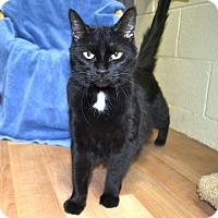 Adopt A Pet :: Ashley - Wheaton, IL