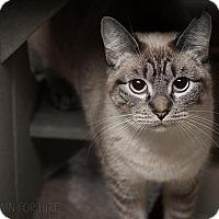Adopt A Pet :: Mitzy - Oakland, CA