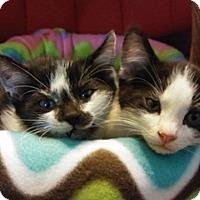Adopt A Pet :: Quincy Morris - Tampa, FL