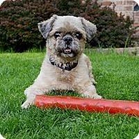 Adopt A Pet :: Peko - Pittsburgh, PA