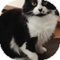 Adopt A Pet :: Pépé-Smith - Vancouver, BC
