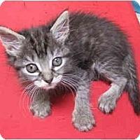 Adopt A Pet :: Gertrude - Davis, CA