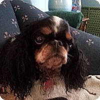 Adopt A Pet :: Beatrice - Cumberland, MD