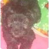 Adopt A Pet :: Prince Charles - Phoenix, AZ