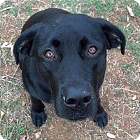 Adopt A Pet :: Squirt - Greeley, CO