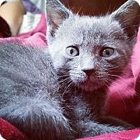 Adopt A Pet :: Sushi - Ft. Lauderdale, FL
