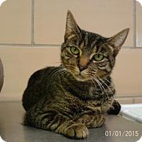 Adopt A Pet :: Destiny - Renfrew, PA