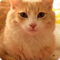 Adopt A Pet :: Quincy - Palo Alto, CA