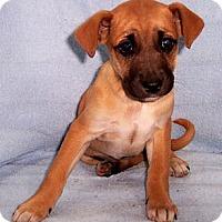 Adopt A Pet :: Colleen - Byrdstown, TN