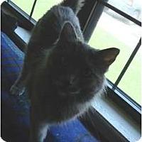 Adopt A Pet :: January - Lake Charles, LA