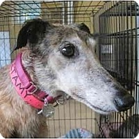 Adopt A Pet :: Amy (Flying Sweet Amy) - Chagrin Falls, OH