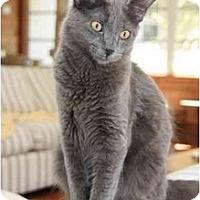 Adopt A Pet :: Toby - Naples, FL