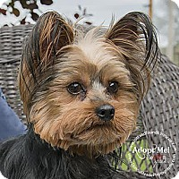 Adopt A Pet :: Bernie~Adopted! - Troy, OH